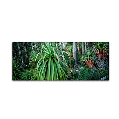 Trademark David Evans Pandani Grove-Tas Gallery-Wrapped Canvas Art, 8 x 24