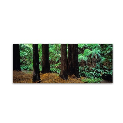 Trademark David Evans Redwoods and Ferns-Otway Ranges Gallery-Wrapped Canvas Art, 10 x 32