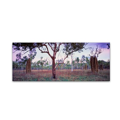 Trademark David Evans Termite Country-Kakadu Gallery-Wrapped Canvas Art, 16 x 47