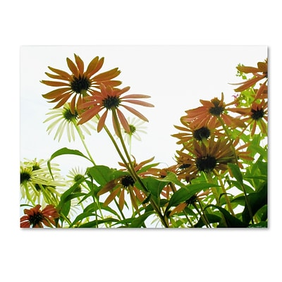 Trademark Kathie McCurdy Orange Coneflowers Gallery-Wrapped Canvas Art, 35 x 47