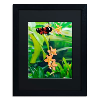 Trademark Kurt Shaffer Hecale Longwing on Orchid Art, Black Matte With Black Frame, 16 x 20