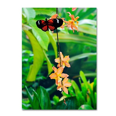 Trademark Kurt Shaffer Hecale Longwing on Orchid Gallery-Wrapped Canvas Art, 14 x 19