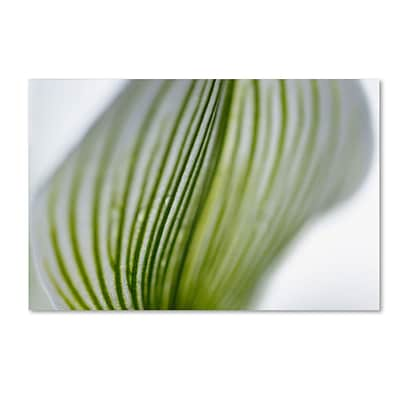 Trademark Kurt Shaffer Orchid Abstract Blurred Lines Gallery-Wrapped Canvas Art, 22 x 32