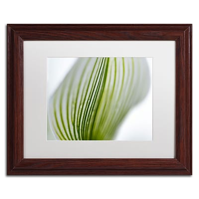 Trademark Kurt Shaffer Orchid Abstract Blurred Lines Art, White Matte With Wood Frame, 11 x 14