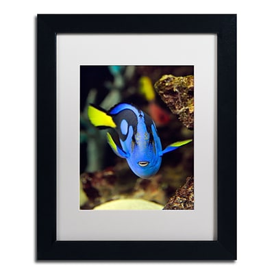 Trademark Kurt Shaffer Parrot Fish Art, White Matte With Black Frame, 11 x 14