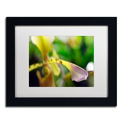 Trademark Kurt Shaffer To Touch an Orchid Art, White Matte With Black Frame, 11 x 14