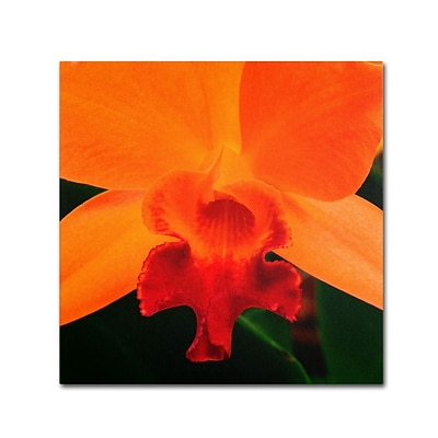 Trademark Kurt Shaffer Brilliant Orchid on Fire Gallery-Wrapped Canvas Art, 18 x 18