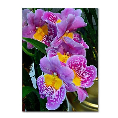 Trademark Kurt Shaffer Happy Orchids Gallery-Wrapped Canvas Art, 35 x 47