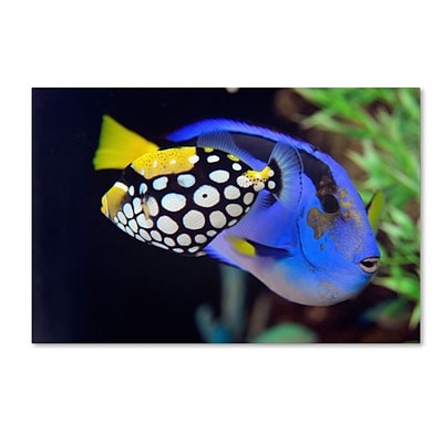 Trademark Kurt Shaffer Colorful Tropical Fish Gallery-Wrapped Canvas Art, 30 x 47