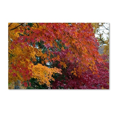 Trademark Kurt Shaffer Autumn Explosion Gallery-Wrapped Canvas Art, 22 x 32