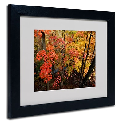 Trademark Kurt Shaffer Brilliant Autumn Forest Art, White Matte With Black Frame, 11 x 14
