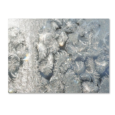 Trademark Kurt Shaffer Frost Pattern in the Sun Gallery-Wrapped Canvas Art, 18 x 24
