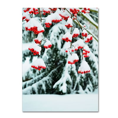 Trademark Kurt Shaffer Winter Berries and Pine Gallery-Wrapped Canvas Art, 35 x 47