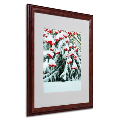 Trademark Kurt Shaffer Winter Berries and Pine Art, White Matte With Wood Frame, 16 x 20