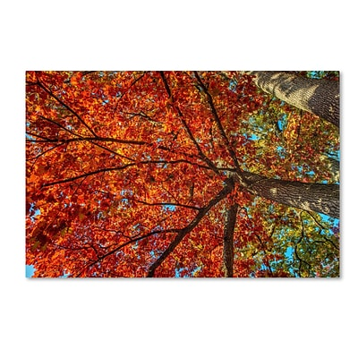 Trademark David Ayash New York Fall-II Gallery-Wrapped Canvas Art, 30 x 47