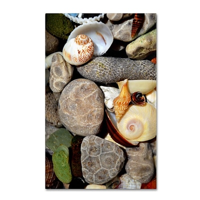 Trademark Michelle Calkins Petoskey Stones ll Gallery-Wrapped Canvas Art, 12 x 19