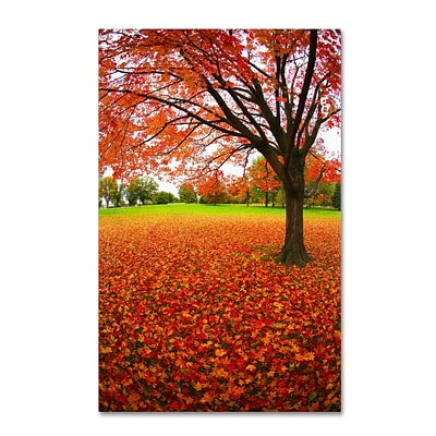 Trademark CATeyes Autumn Expressions Gallery-Wrapped Canvas Art, 12 x 19
