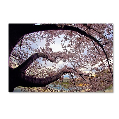 Trademark CATeyes Cherry Blossoms 2014-1 Gallery-Wrapped Canvas Art, 22 x 32