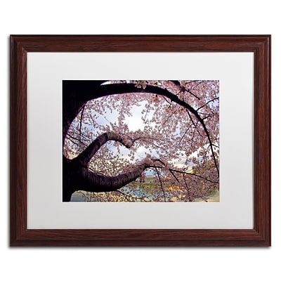 Trademark CATeyes Cherry Blossoms 2014-1 Art, White Matte W/Wood Frame, 16 x 20