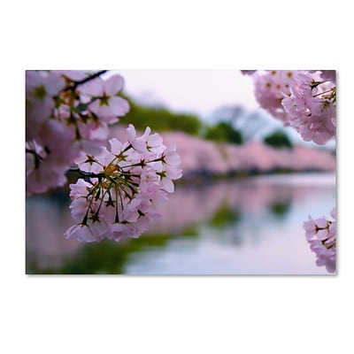 Trademark CATeyes Cherry Blossoms 2014-2 Gallery-Wrapped Canvas Art, 12 x 19