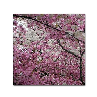 Trademark CATeyes Cherry Blossoms 2014-3 Gallery-Wrapped Canvas Art, 18 x 18
