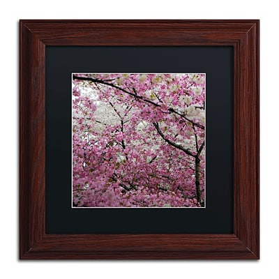 Trademark CATeyes Cherry Blossoms 2014-3 Art, Black Matte W/Wood Frame, 11 x 11