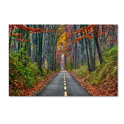Trademark CATeyes Paths Gallery-Wrapped Canvas Art, 16 x 24
