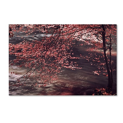 Trademark Philippe Sainte-Laudy Autumn Serenade Gallery-Wrapped Canvas Art, 22 x 32