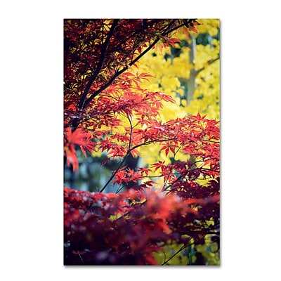 Trademark Philippe Sainte-Laudy Red vs Yellow Gallery-Wrapped Canvas Art, 16 x 24