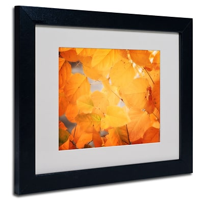Trademark Philippe Sainte-Laudy Seasonal Leaves Art, White Matte With Black Frame, 11 x 14