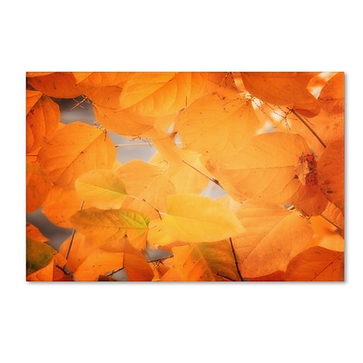 Trademark Philippe Sainte-Laudy Seasonal Leaves Gallery-Wrapped Canvas Art, 30 x 47