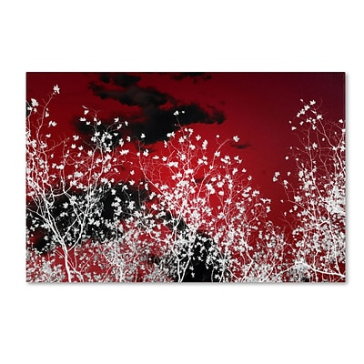 Trademark Philippe Sainte-Laudy Skyfall Gallery-Wrapped Canvas Art, 16 x 24