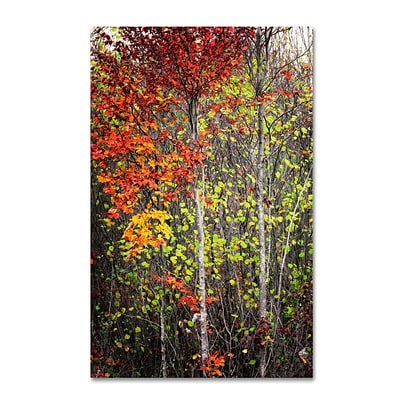 Trademark Philippe Sainte-Laudy Colour Touch Gallery-Wrapped Canvas Art, 16 x 24