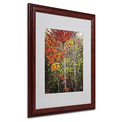 Trademark Philippe Sainte-Laudy Colour Touch Art, White Matte With Wood Frame, 16 x 20