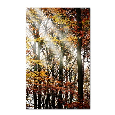 Trademark Philippe Sainte-Laudy Just the Light Gallery-Wrapped Canvas Art, 22 x 32
