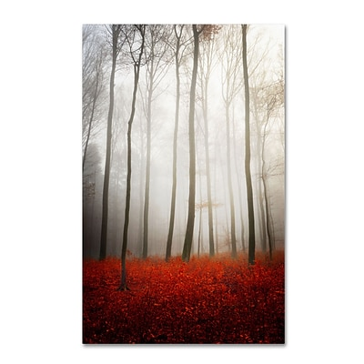 Trademark Philippe Sainte-Laudy Leafless Gallery-Wrapped Canvas Art, 16 x 24
