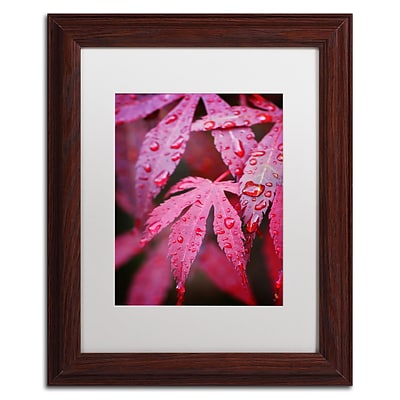 Trademark Philippe Sainte-Laudy Red Maple Leaves Art, White Matte With Wood Frame, 11 x 14
