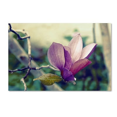 Trademark Patty Tuggle Pink Magnolia Gallery-Wrapped Canvas Art, 16 x 24