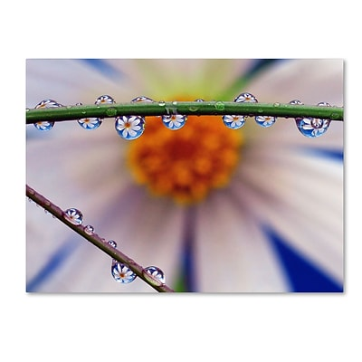 Trademark Steve Wall Petal Pearls Gallery-Wrapped Canvas Art, 14 x 19