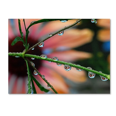 Trademark Steve Wall Rain Worlds Gallery-Wrapped Canvas Art, 18 x 24