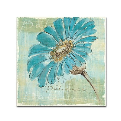 Trademark Chris Paschke Spa Daisies II Gallery-Wrapped Canvas Art, 35 x 35