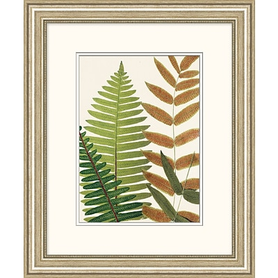 Natures Fern 2 Framed Art; 20 x 24