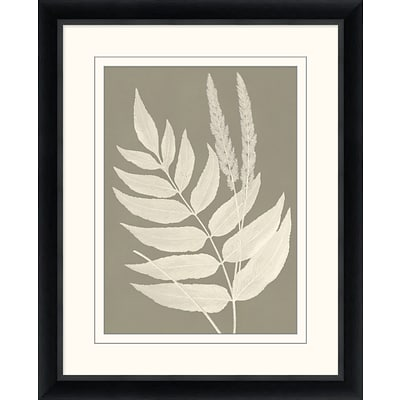 Neutral Fern Study 1 Framed Art; 26 x 32