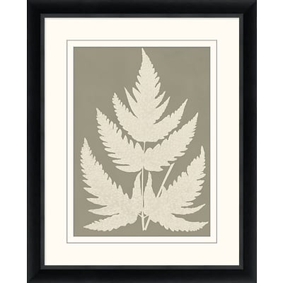 Neutral Fern Study 2 Framed Art; 26 x 32