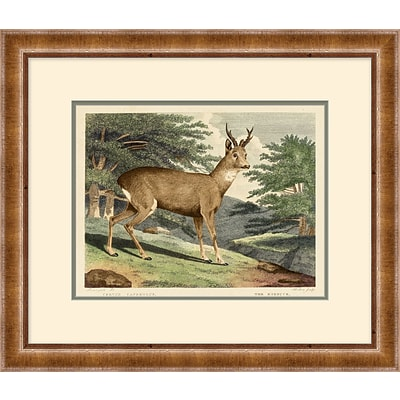 Deer Framed Art; 28 x 24
