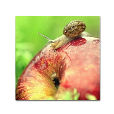 Trademark Fine Art BC0152-C1414GG The Very Hungry Snail by Beata Czyzowska Young 14x14 FRMLS Art