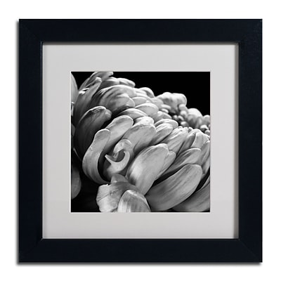 Trademark Fine Art ALI0291-B1111MF Mum I by Michael Harrison 11 x 11 Framed Art, White Matted