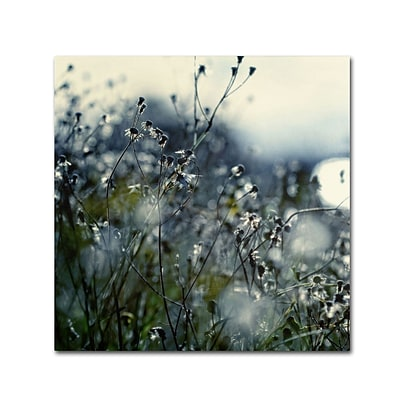 Trademark Fine Art BC0126-C3535GG In Silence by Beata Czyzowska Young 35 x 35 Frameless Art