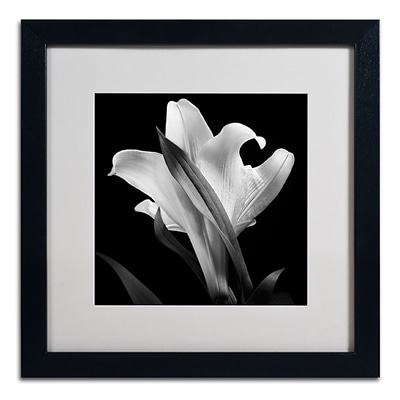 Trademark Fine Art ALI0289-B1616MF Lily by Michael Harrison 16 x 16 Framed Art, White Matted