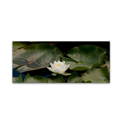 Trademark Fine Art KS0145-C819GG One White Water Lily by Kurt Shaffer 8 x 19 Frameless Art